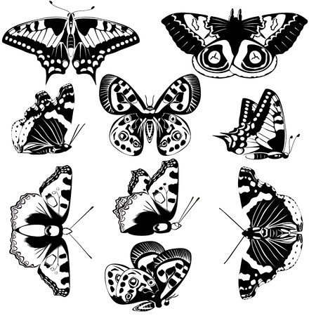 The contours of butterflies  Black and white illustration
