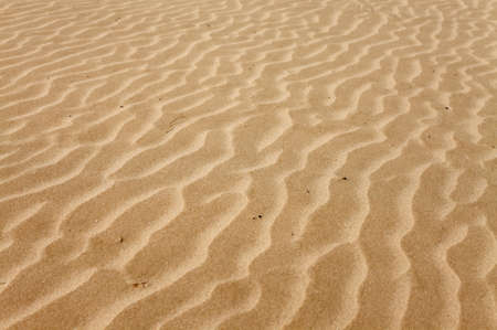 Soft sand texture with lines made by the wind