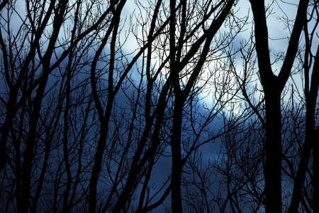 Bare leafless trees against winter twilight sky