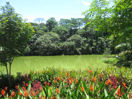 jardin amazonia