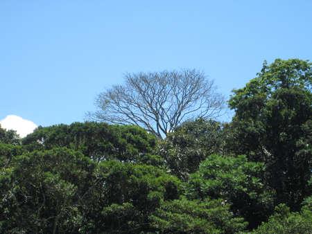 Bosque amazonico