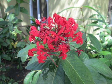 Flor llamativa