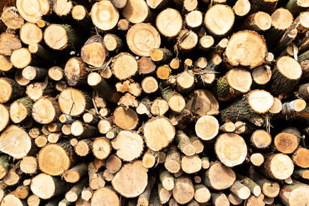 Different sized logs, which are stacked on top of each other as background or wallpaper photographed frontally
