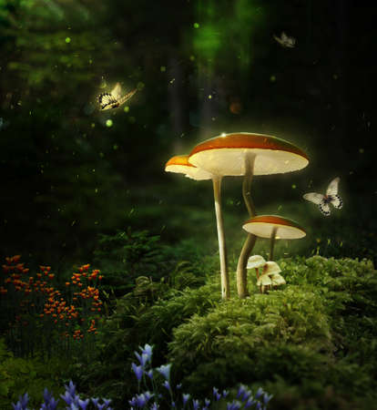 Photo pour Fantasy mushrooms in the forest at night. 3D rendering. Photomanipulation. Digital art. - image libre de droit