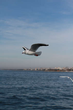 Photo for Seagulls Try To Catch Food That People Throwing From Ship - Royalty Free Image