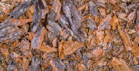 Foto de background of bark from a pine tree that is scattered on the ground - Imagen libre de derechos