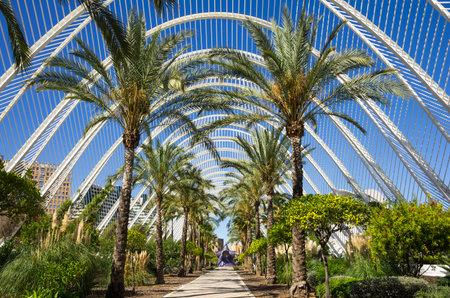 Palm alley in the City of Arts and Sciences (Ciudad de las artes y las ciencias) in Valencia, Spain