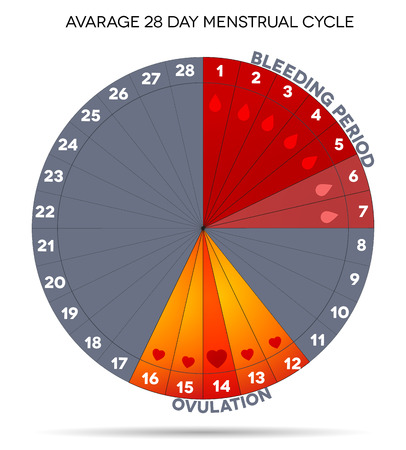 Menstrual cycle graphic. Avarage menstrual cycle days. Bleeding period and ovulation.