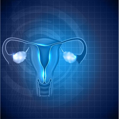 Female reproductive system background. Normal female uterus and ovaries illustration.