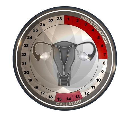 Menstrual cycle calendar, days of menstruation and ovulation. Female reproductive system anatomy at the middle, uterus and ovaries.