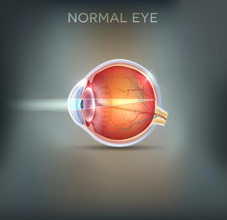The eye. Detailed anatomy, healthy eye illustration on a beautiful mesh background.