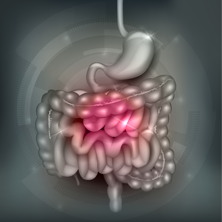 Illustration pour Gastrointestinal tract. Stomach, small intestine and colon, abstract grey mesh background. Beautiful bright illustration. - image libre de droit