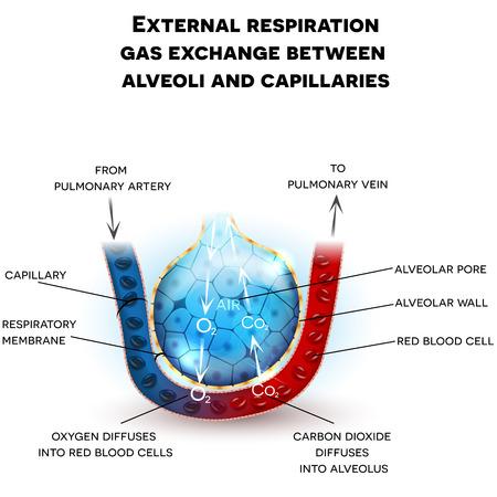 Ready made deisgns for alveolus