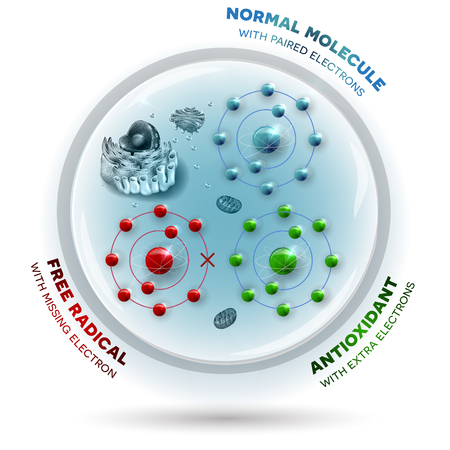 Illustration pour Three molecules inside the human cell: Free radical with missing electron, Normal stable molecule with paired electrons and Antioxidant with extra electrons which can be donated to free radical - image libre de droit