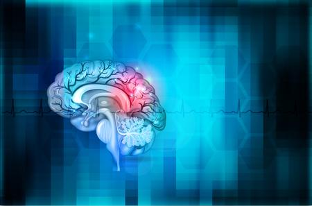 Illustration pour Human brain abstract blue background, beautiful colorful illustration detailed anatomy - image libre de droit