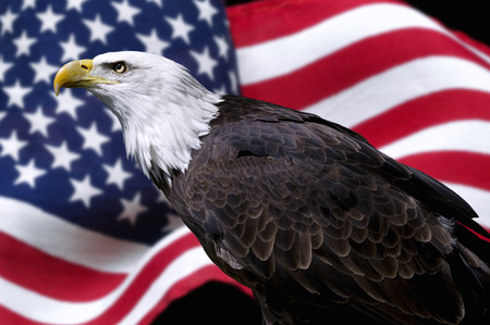Photo for American eagle with flag - Royalty Free Image