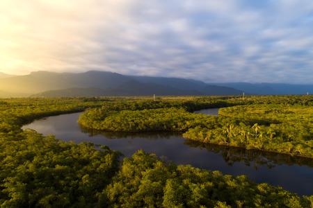 Photo pour Amazon Rainforest in Brazil - image libre de droit