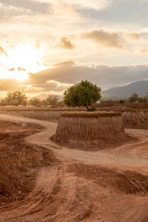 Foto de An isolated tree in the middle of a large excavation on a small island at sunset. Environment concept - Imagen libre de derechos