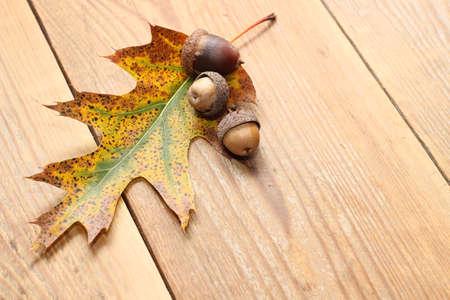 Herbst - Eicheln mit Blatt