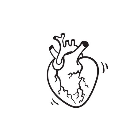 hand drawn vector isolated human heart. Anatomically correct heart with venous system.doodle