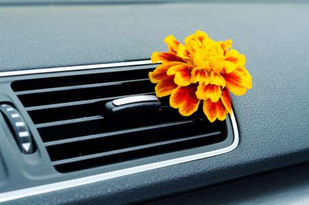Flower in car interior ventilation as a natural air freshener