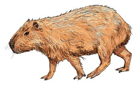 Illustration pour The vector of capybara - image libre de droit