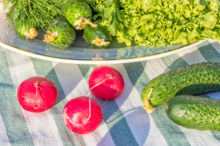 Photo for Still life with fresh spring vegetables, close-up. Green lettuce, dill, cucumbers and red radish on a white porcelain plate and striped linen napkin - Royalty Free Image