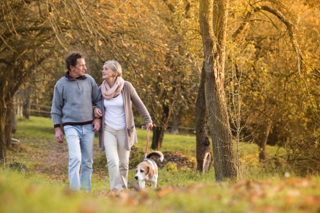 Senior couple walking their beagle dog in autumn countryside