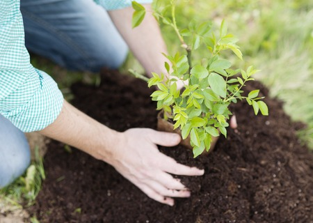 Photo pour Close-up of young man s hands planting small tree in his backyard garden - image libre de droit