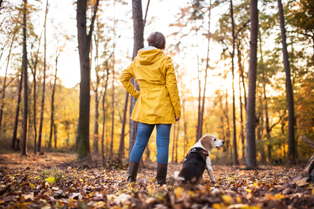 Foto de Senior woman with dog on a walk in an autumn forest. - Imagen libre de derechos