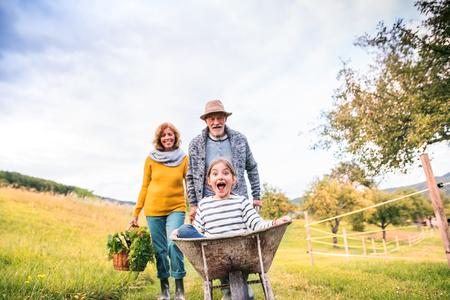 Foto für Senior couple with grandaughter gardening in the backyard garden. - Lizenzfreies Bild