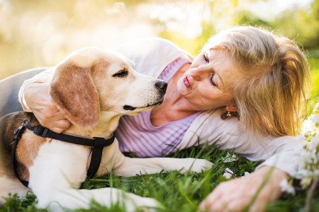 Beautiful senior woman with dog in spring nature.の写真素材