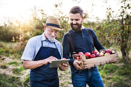 Foto de A senior man and adult son with a tablet standing in apple orchard in autumn. - Imagen libre de derechos