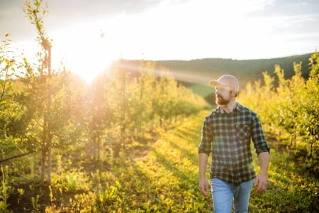 Photo pour A mature farmer walking outdoors in orchard at sunset. Copy space. - image libre de droit