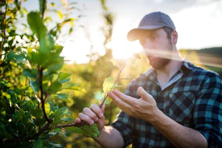 Photo pour A mature farmer working in orchard at sunset. - image libre de droit