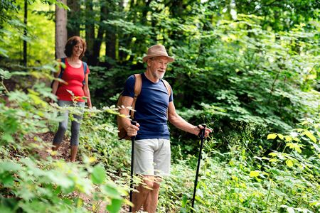 Photo pour Senior tourist couple with backpacks on a walk in forest in nature. - image libre de droit