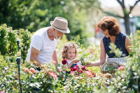 Photo for Senior grandparents and granddaughter gardening in the backyard garden. - Royalty Free Image