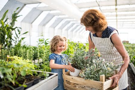 Photo pour Small girl with senior grandfmother gardening in the greenhouse. - image libre de droit