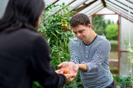 Foto de Down syndrome adult man gathering tomatoes in greenhouse, gardening concept. - Imagen libre de derechos