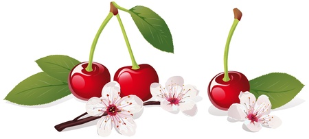 Illustration pour still life with cherry and cherry blossom  - image libre de droit