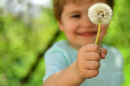 Photo pour Blurred child. Little boy in forest holds one dandelion. Cute smile from child on nature. Spring and summer in the air. Blond kid in blue T-shirt on day walk. Exploring process in childhood. - image libre de droit