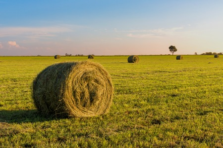 Round fodder bales