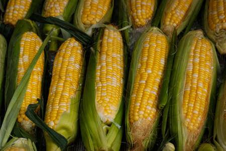 Foto für fresh corn on market , corncobs closeup - Lizenzfreies Bild