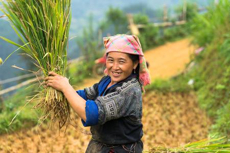 Mu Cang Chai, Vietnam - Sep 17, 2016: Portrait of minority Hmong woman harvests rice on terraced paddy field