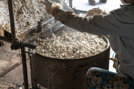 Silkworm cocoon is boilling and unwinding by Vietnamese worman to make silk thread at village in Nam Dinh province, Vietnam