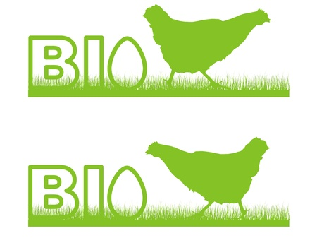 biological chicken egg