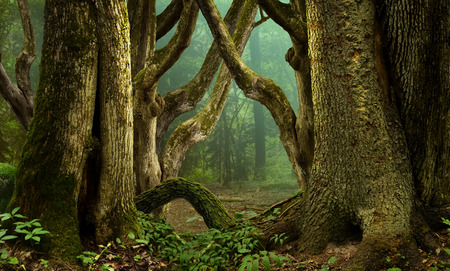 Fantasy forest with massive mossy crooked trees