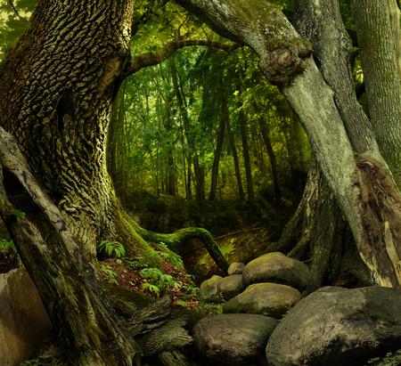Fantasy forest with mossy hollowed crooked trees and rocks