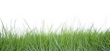 Photo pour Fresh grass on white background - image libre de droit