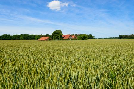 farm in cornfield